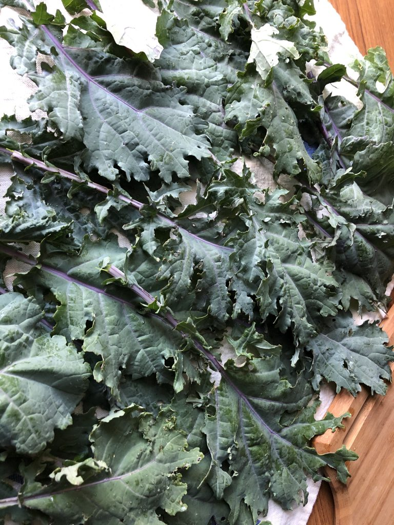 Kale drying on a dish towel